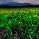 ADIRONDACK MEADOW by MIKESANDY