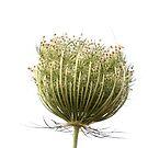 Wild flora XI 5459 by João Castro