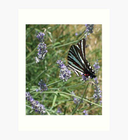 Summer Flutter 1 Art Print