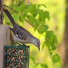 Mocking Bird the State bird of Arkansas by Susan Blevins
