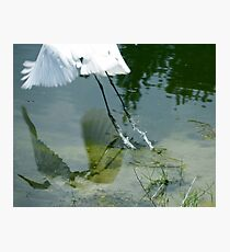 Reflection of an Egret in Flight Photographic Print