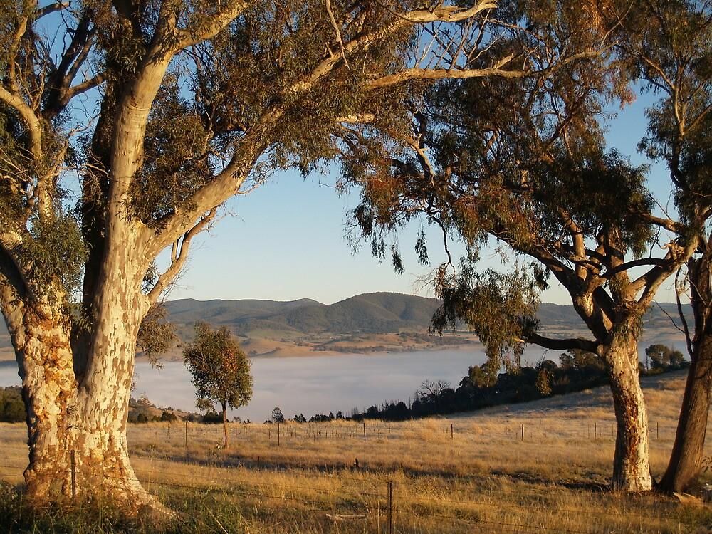 Early Morning Landscape by shortshooter-Al