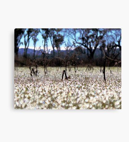 Frost - Dangars Lagoon, Northern Tablelands, NSW, Australia Canvas Print