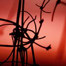 Barbed Vine in Red by StrangeDayPhoto