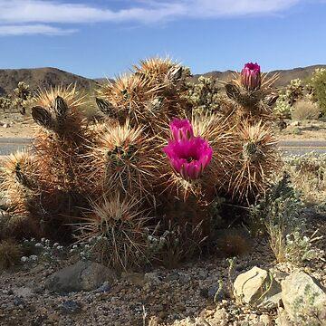 Joshua Tree Cacti by lyoung403b