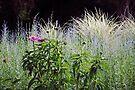 Purple and Silver Garden by MarjorieB