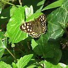 Gefleckter hölzerner Schmetterling von lezvee