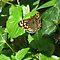 Avatar / Butterflies Or Moths