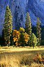 """Fall In Yosemite Valley"" by Lynn Bawden"