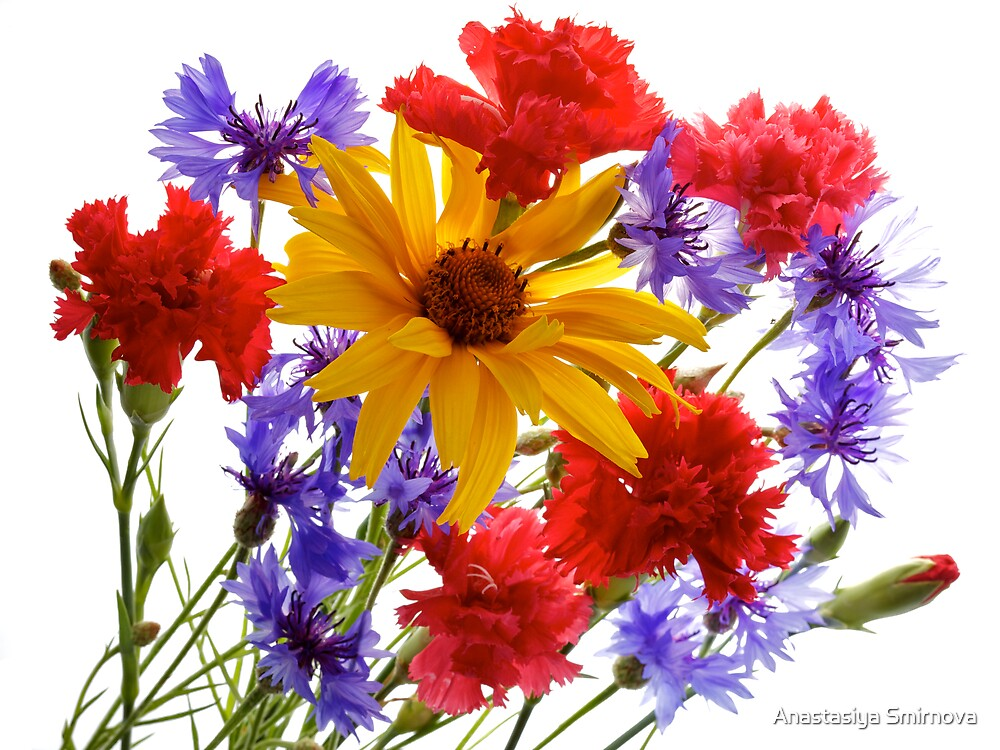 summer flowers: heliopsis, blue cornfolwers and pink carnations by Anastasiya Smirnova