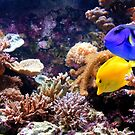 Tropical Fish on the Reef by John Wallace