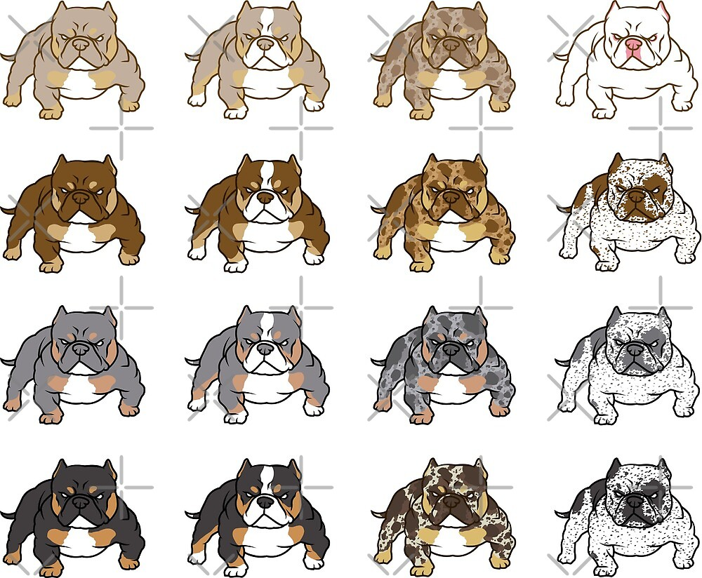 Exotic Bully Rare Colors