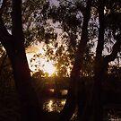 Evening Rays by Lozzar Landscape