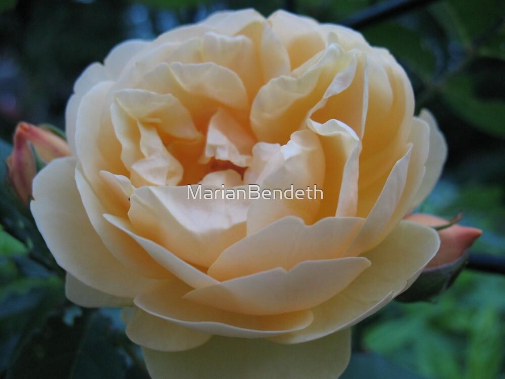 Summertime Lemon Rose by MarianBendeth