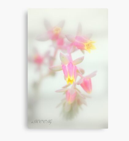 Cacti flower Canvas Print