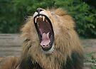 Lion's Roar by Peter Barrett