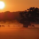 Horses by sunrise in the fog  by angeljootje