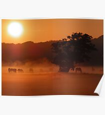 Horses by sunrise in the fog  Poster