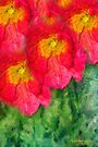 Poppies in Rembrance by Chris Armytage™