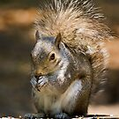 Squirrel Lunch by Geoff Carpenter