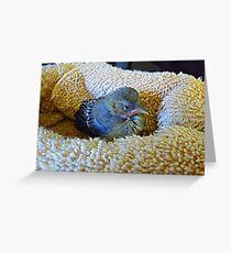 Tweedledee day three. © Greeting Card