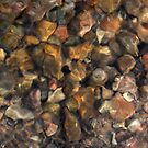 River Rocks by Steve  Taylor