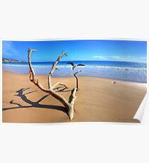 Rainbow Beach Driftwood Poster