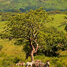 Contented family  by Explorations Africa Dan MacKenzie