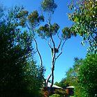 Die Auffahrt hinauf - den Baum von EdsMum
