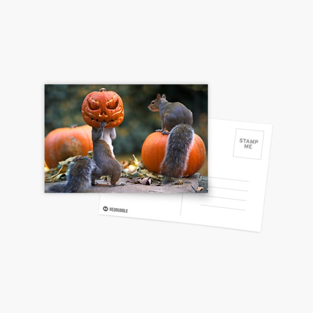Squirrel with a pumpkin on his head Postcard