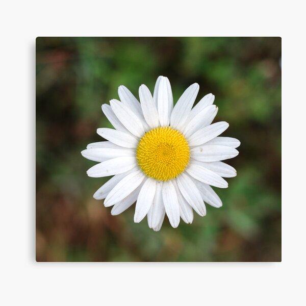 Wild Flower 00003 Canvas Print
