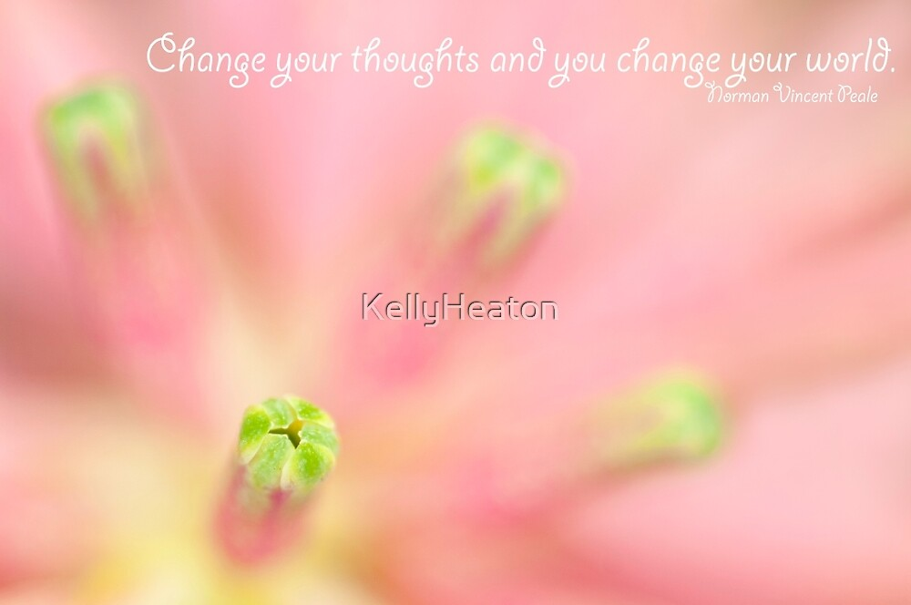Pink Flower and Stamen by KellyHeaton