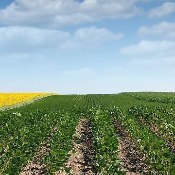 soybean field in summer agriculture by goceris