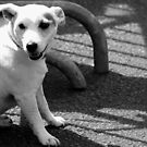 Dog on the street # 4 by Jean-Luc Rollier