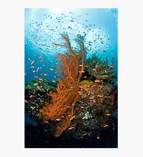 Seafan community Photographic Print