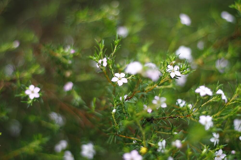 Little Flowers by MaluMoraza
