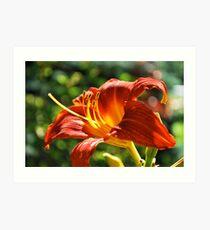 Burt orange Day Lily  Art Print