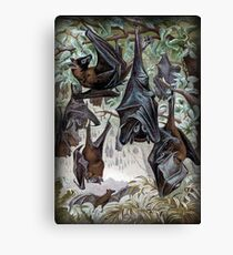 Indian Flying-fox painting  Canvas Print