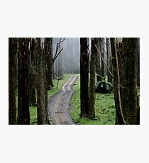 Bicentennial National Trail - Healesville end (Victoria) Photographic Print