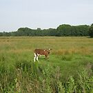 Calf on East Anglian marshland by KatDoodling