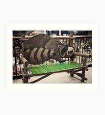 Ronny Raccoon Art Print