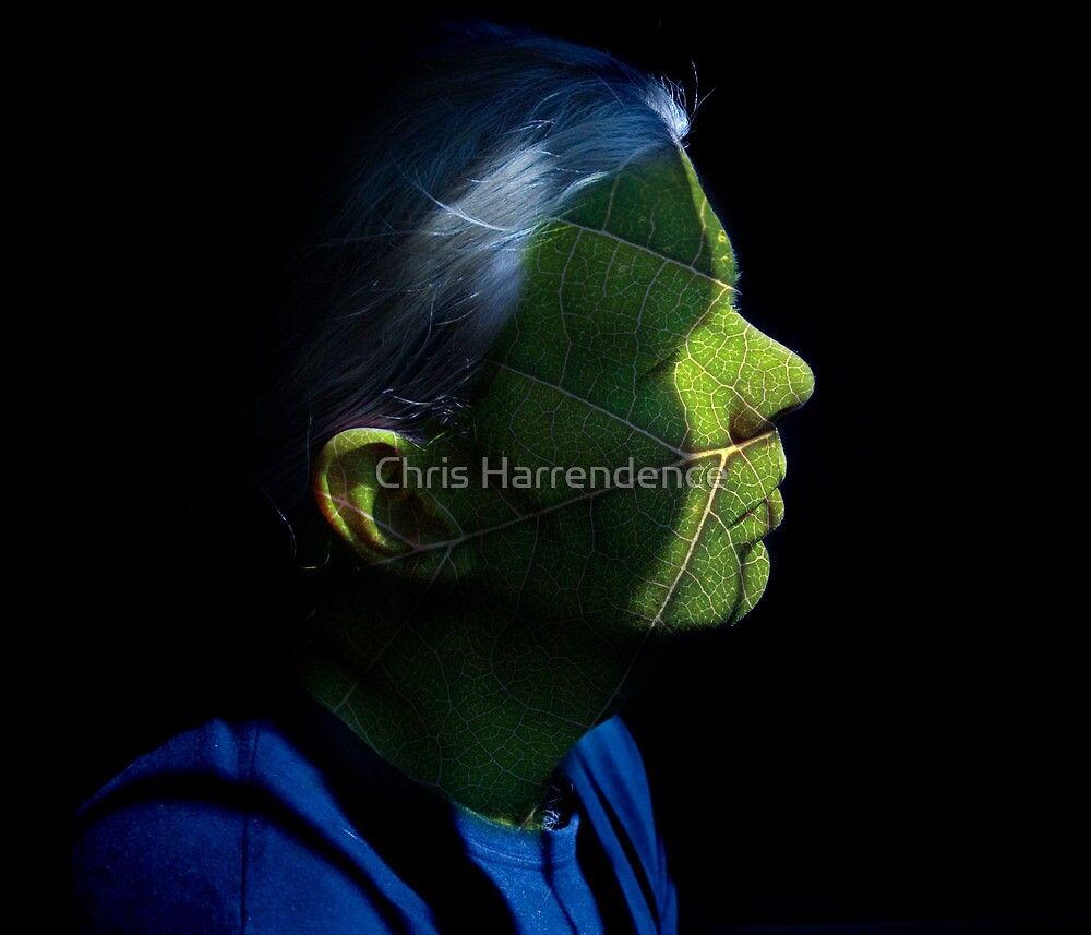 Photosynthesis by Chris Harrendence