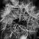Black & White Flower by Michael  Addison