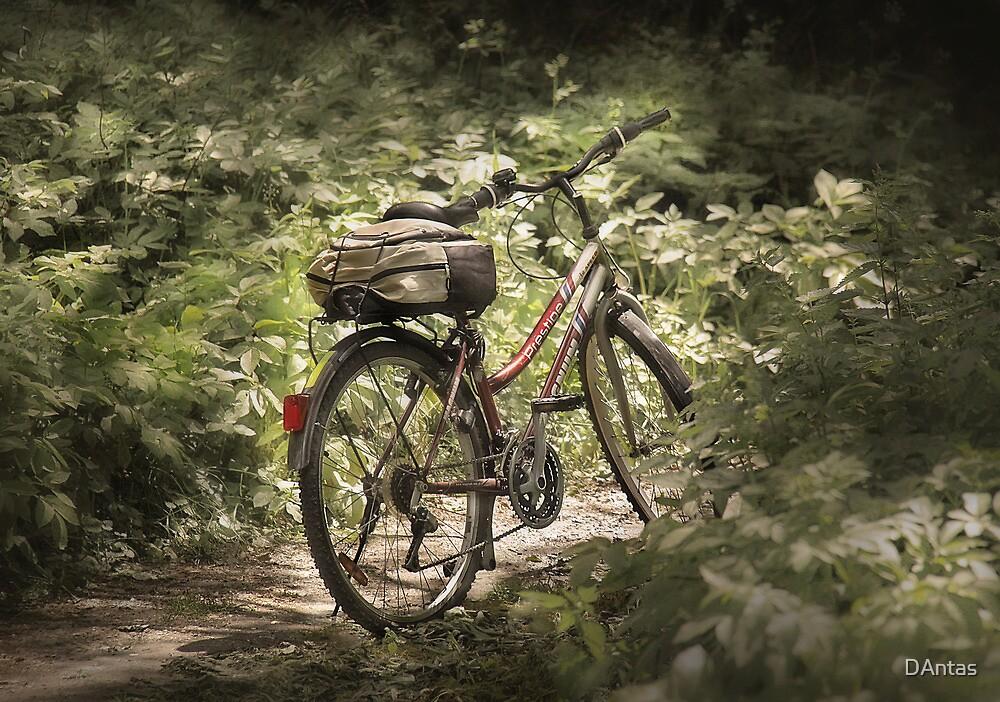 Red Bike by Danuta Antas