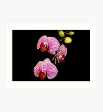 My First Orchids Art Print