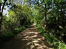 Woodland Walk by Carol Bleasdale
