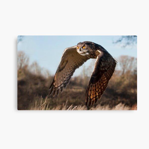 Flight of the Eagle Owl Canvas Print