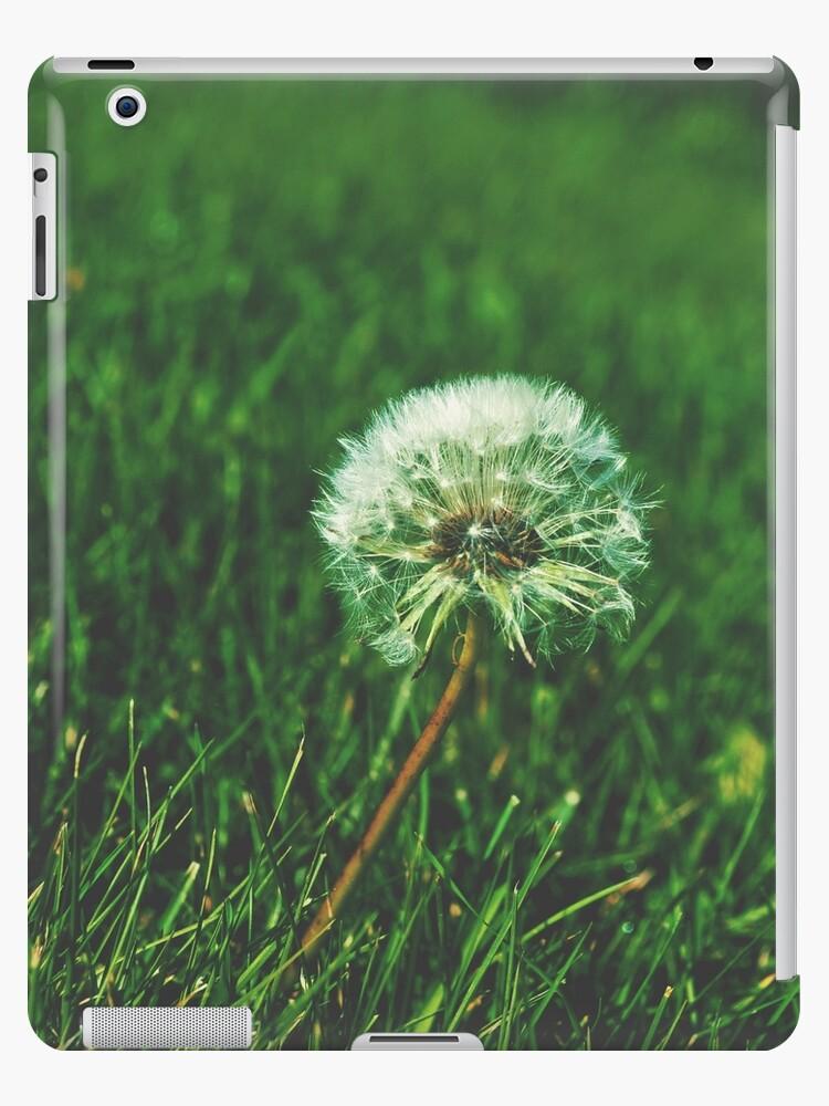 Daffodil by yunnn