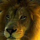 King of the Jungle by oastudios