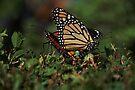 Monarch Mates by Elaine Manley